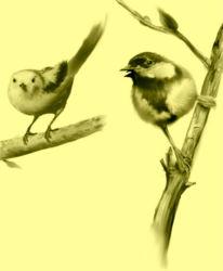 HappyBirds